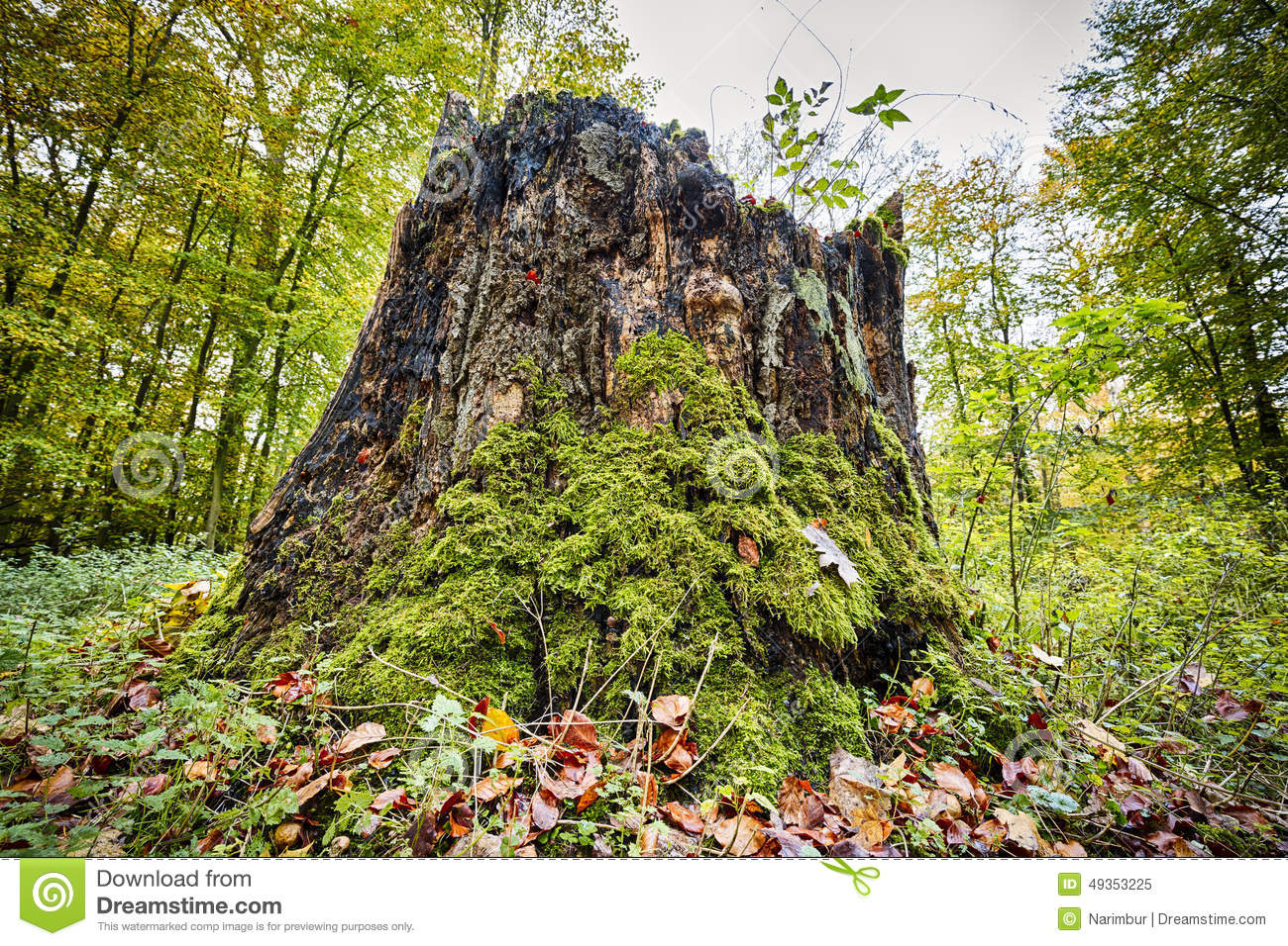 Tree Stump Overgrown With Moss And Grass Stock Photo.
