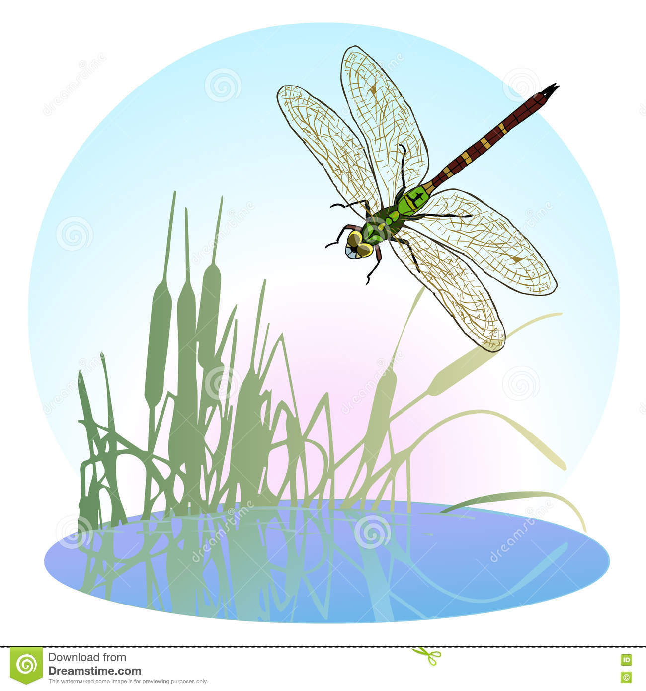 Dragonfly Flying Over A Pond Overgrown With Reeds. Life Is Flying.