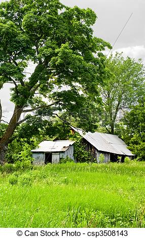 Stock Photos of Run Down Barn in the Overgrowth.
