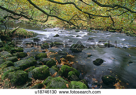 Stock Photography of Rocky woodland stream with overhanging oak.