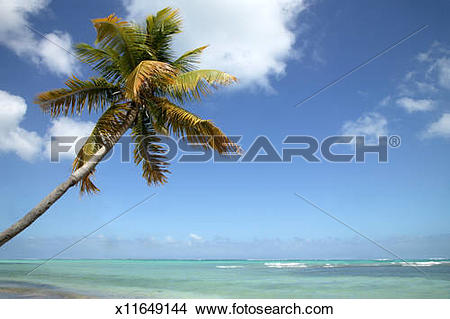 Stock Photo of Palm tree overhanging turquoise water, Caribbean.