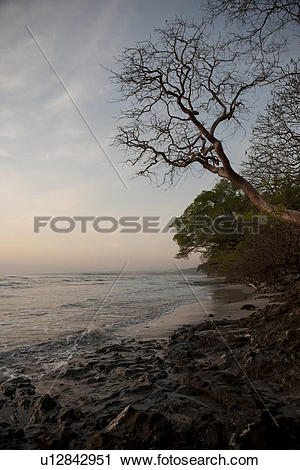 Stock Photography of evening at the ocean with a bare tree.