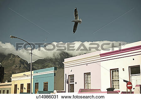 Stock Photography of Seagull flying over painted street, blue sky.