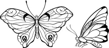 Owl Butterfly Top Side Stock Illustrations.