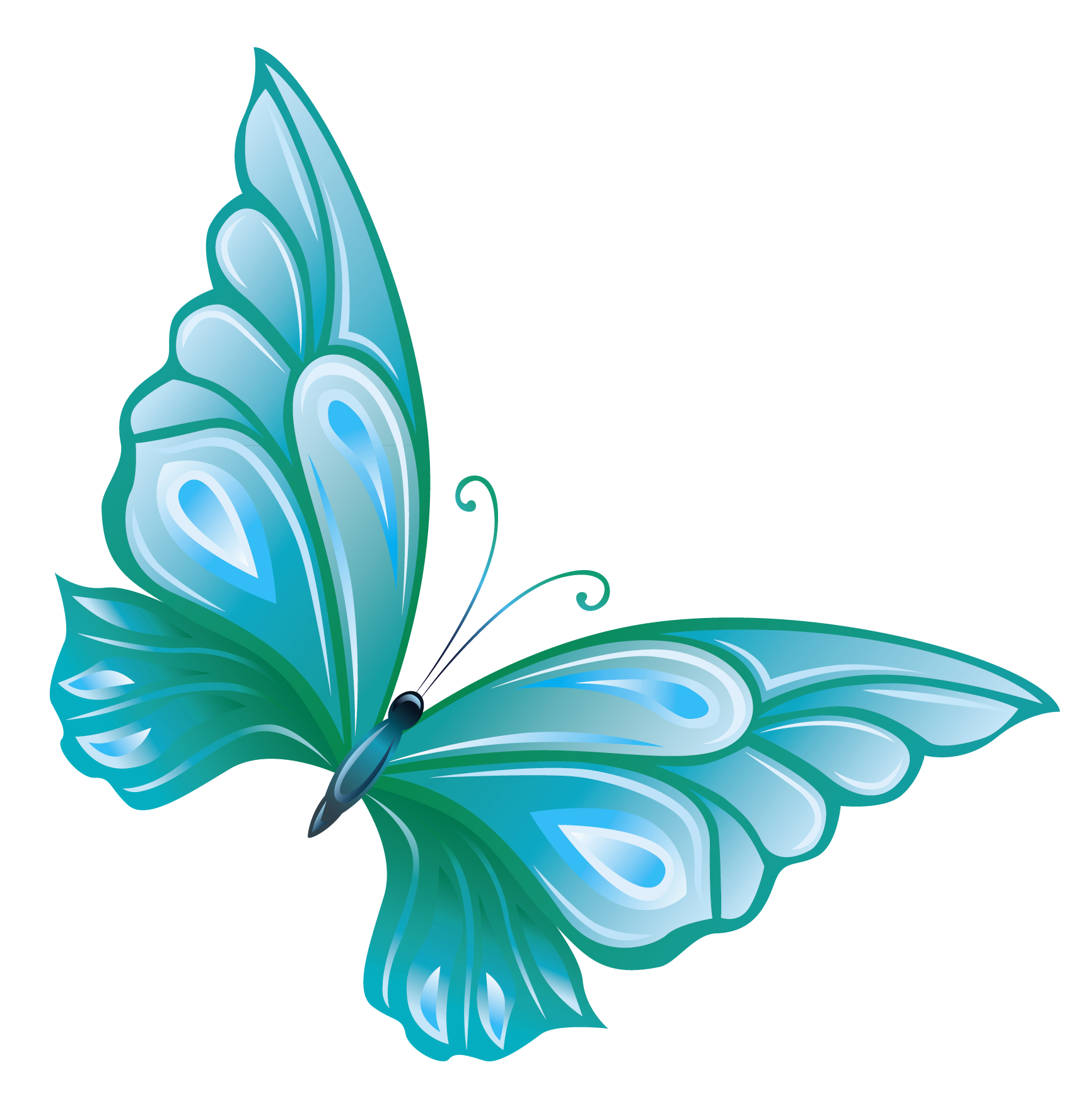 Turquoise butterfly clipart.