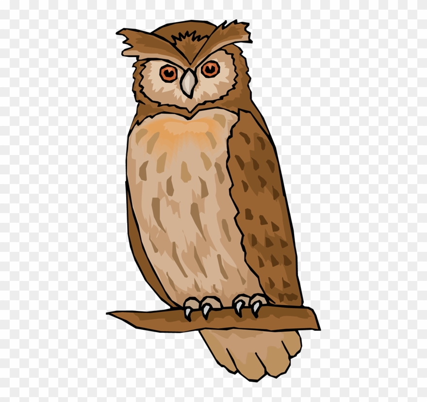 Black And White Library Owl Clipart.