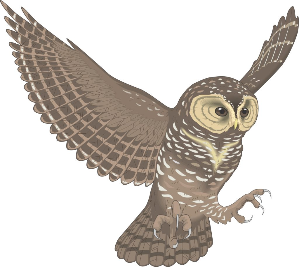 Flying owl clipart 4 » Clipart Station.