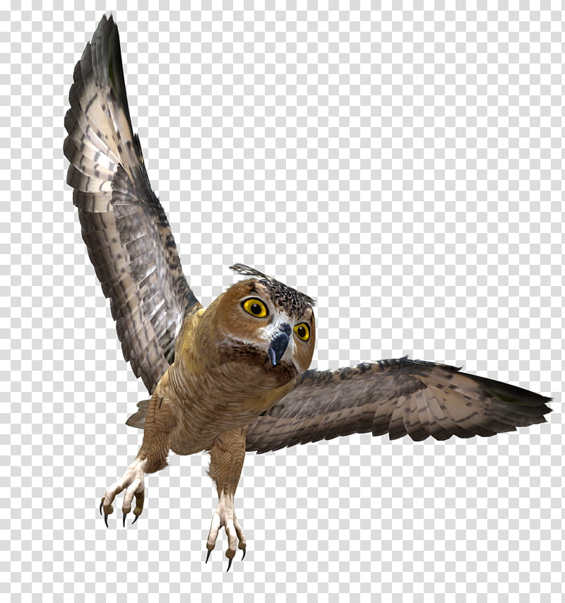 E S Owl, grey and brown owl flying illustration transparent.