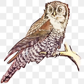 Owl PNG Images, Download 1,664 Owl PNG Resources with.
