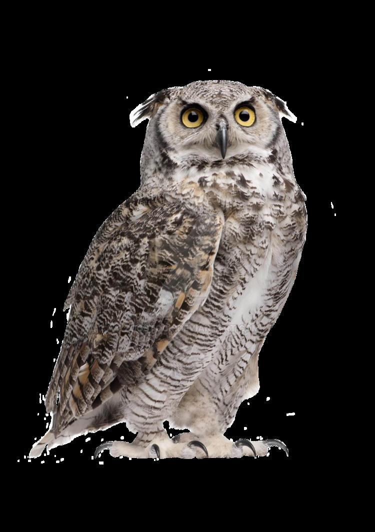 Owl PNG HD Image.