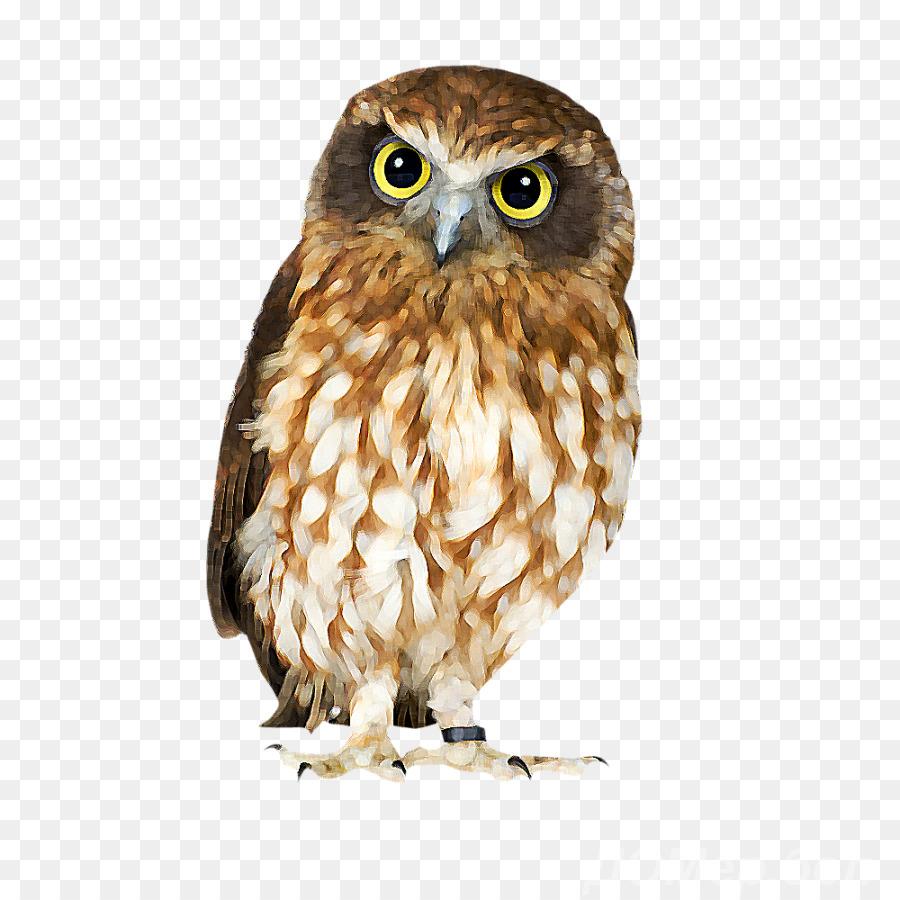 Owl Cartoon png download.