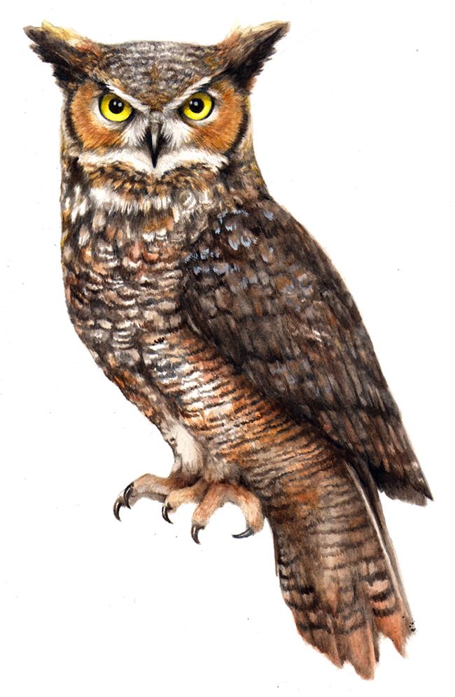 Download Owl PNG File For Designing Use.