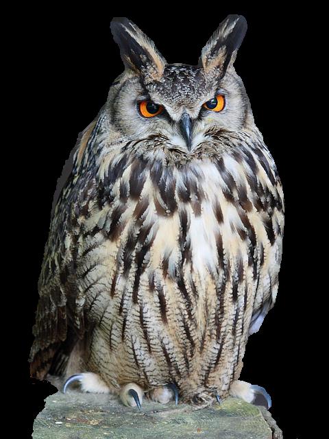 Owl PNG Transparent Images.