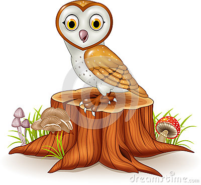 Barn Owl Stock Illustrations.