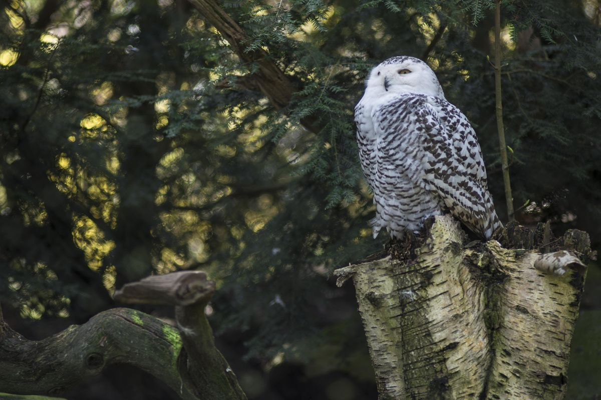 What Makes Owls So Different From Other Bird Species?.