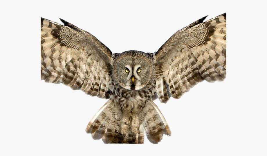Horned Owl Clipart Flying.