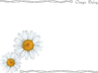Oxeye Daisy Clip Art