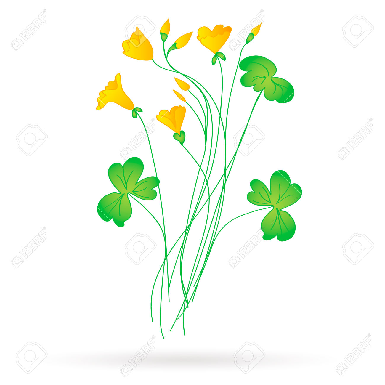 Oxalis Acetosella.yellow Flowers. Royalty Free Cliparts, Vectors.