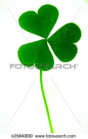 Stock Photography of Leaf of Yellow Wood Sorrel, Oxalis stricta.