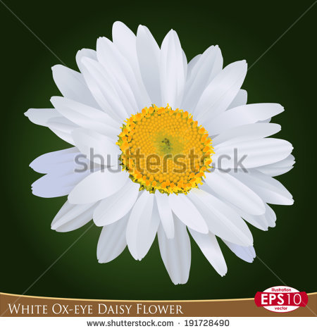 Oxeye Stock Vectors & Vector Clip Art.