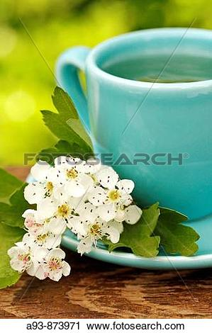 Stock Photography of Hawthorn infusion (Crataegus monogyna or.