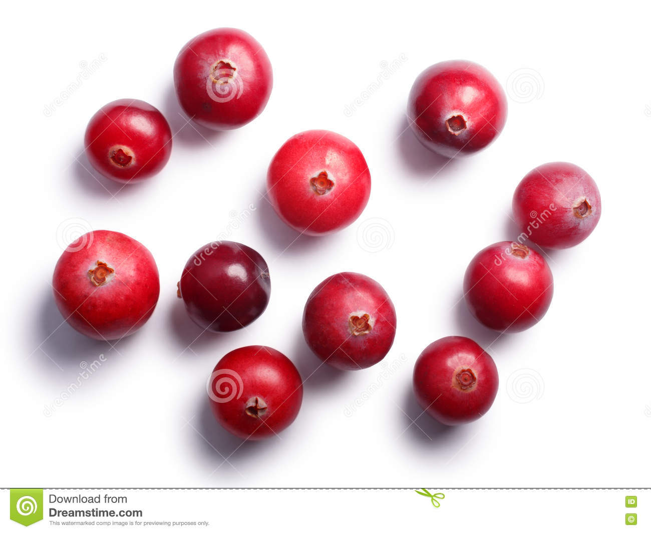 Wild Cranberries, Top View, Paths Stock Photo.