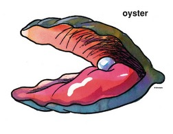 Clipart oyster.