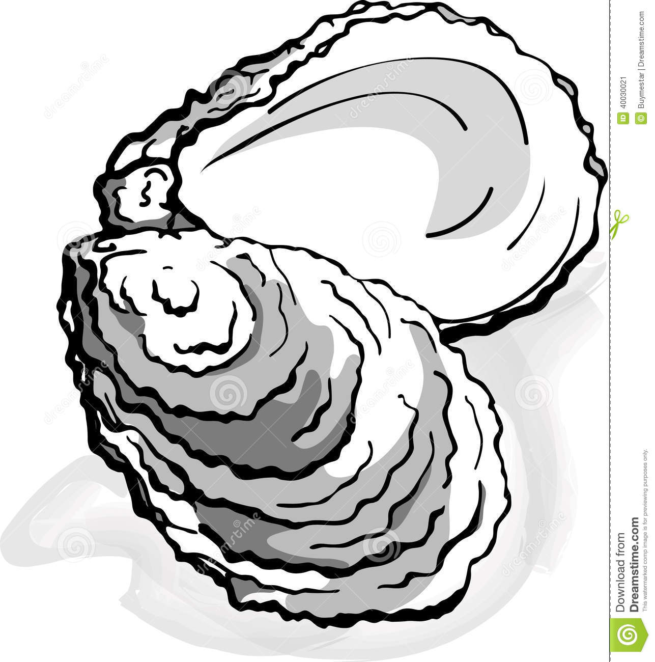 Oyster Stock Illustrations.