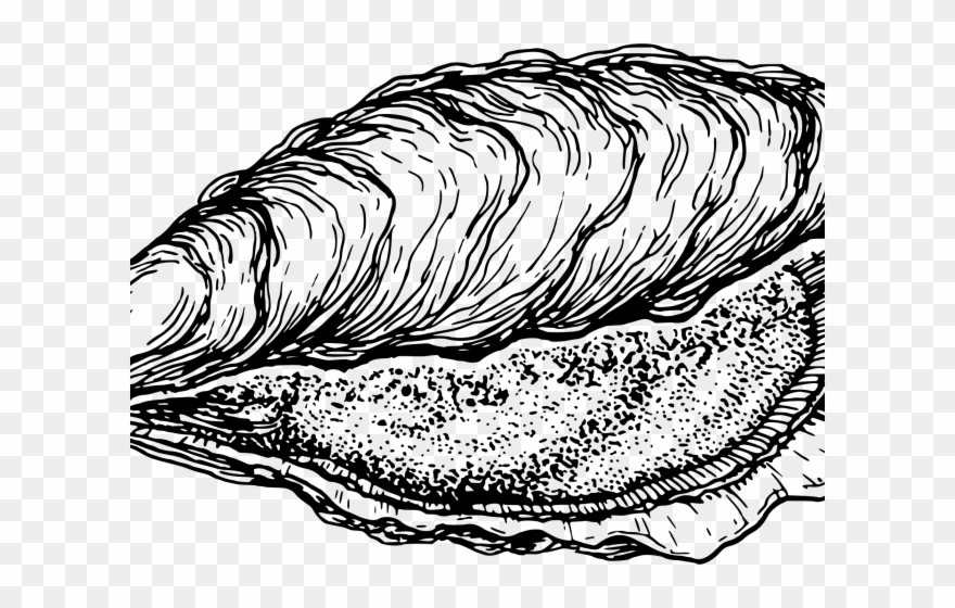 Clams Clipart Oyster.