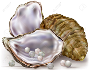 Pearl Oyster Clipart.