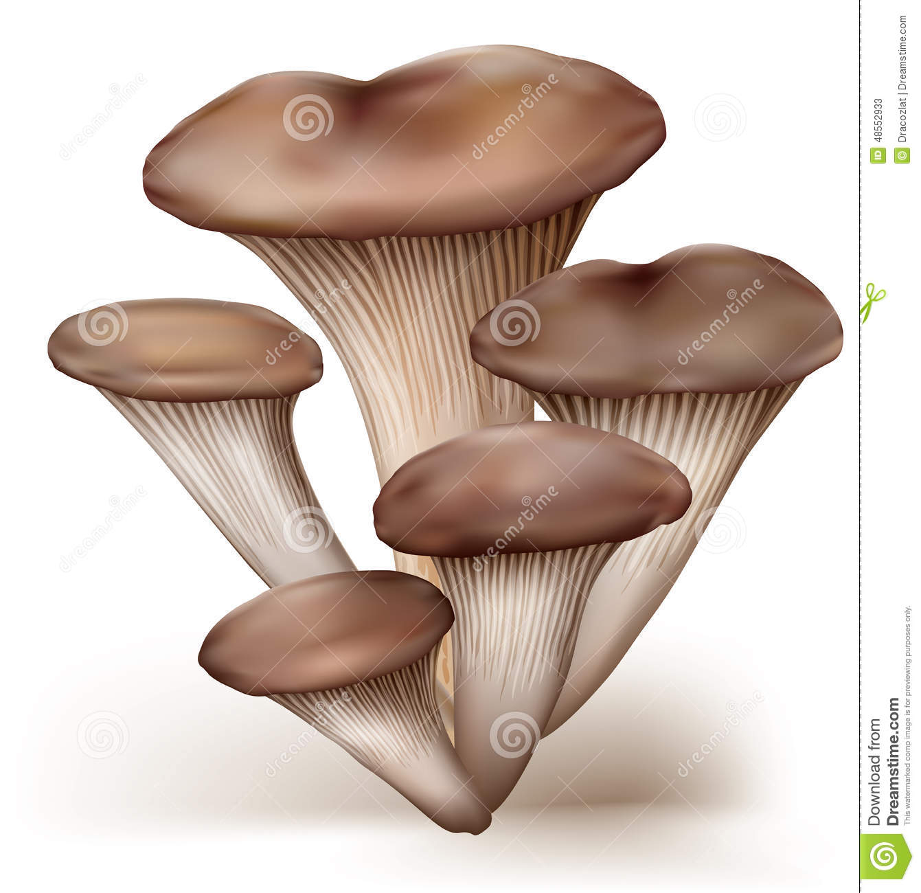 Kings Oyster Mushroom Stock Illustrations.