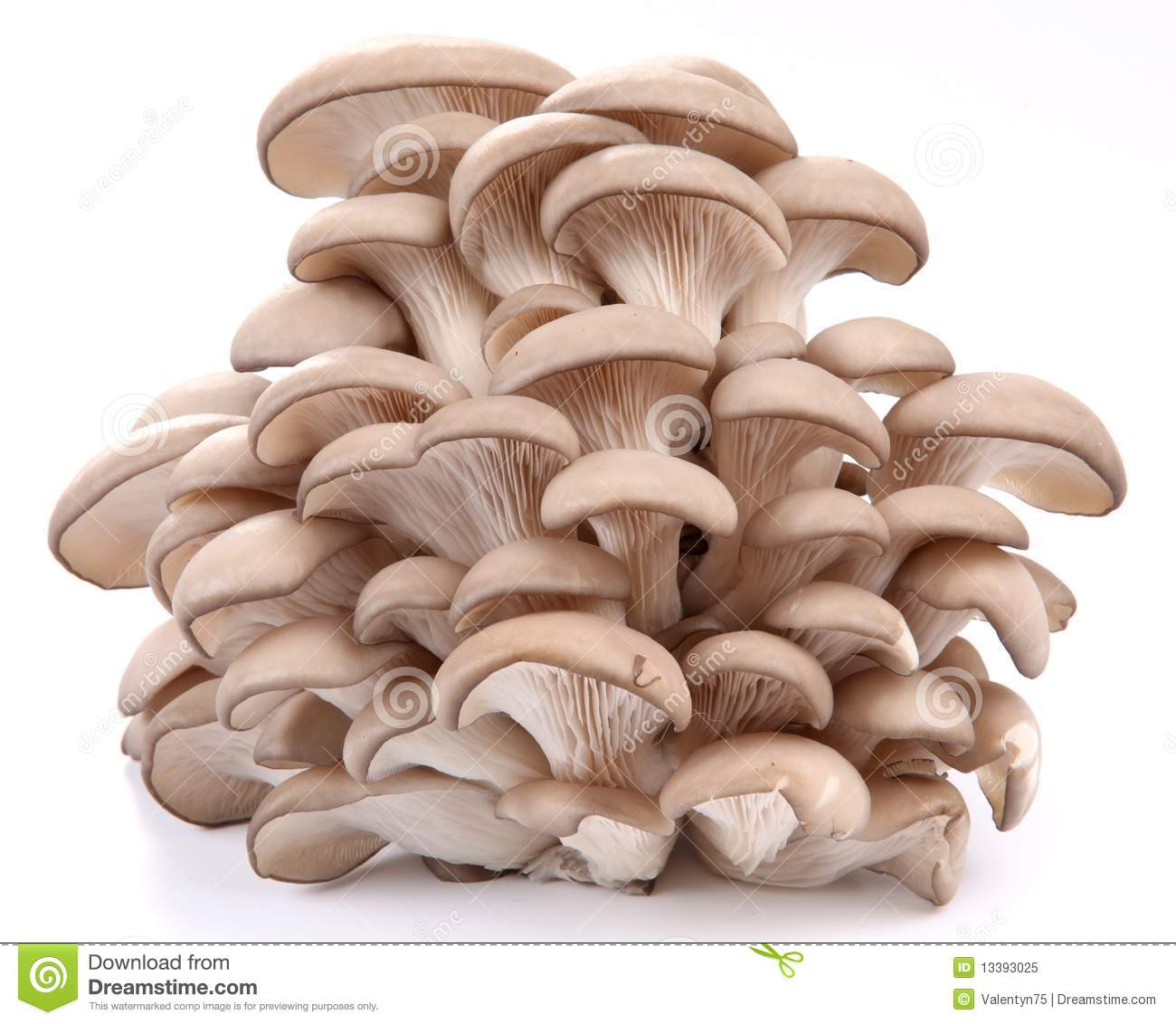Oyster Mushrooms Royalty Free Stock Photo.
