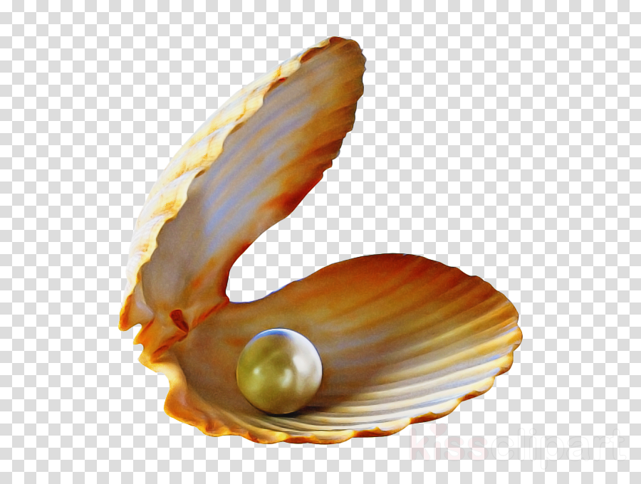 pearl shell conch bivalve oyster clipart.