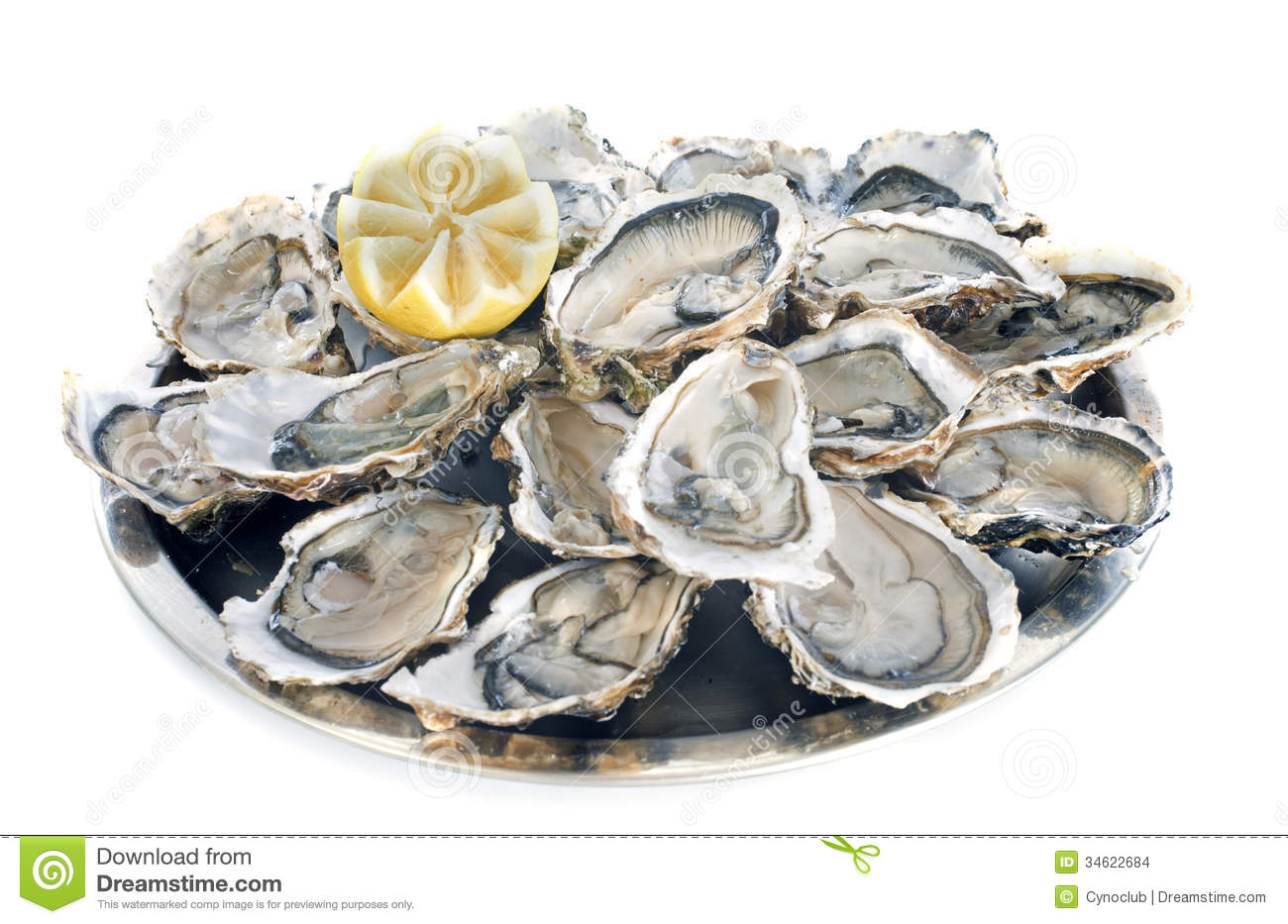 Background clipart oyster.