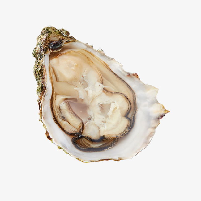 Oysters Png (103+ images in Collection) Page 2.