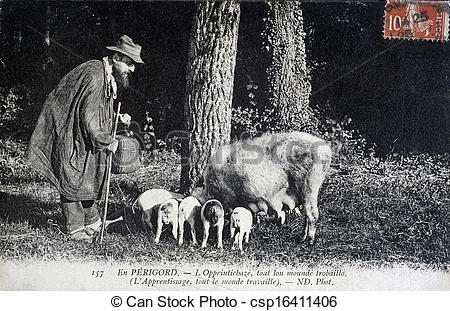 Stock Photography of old postcard, Perigord truffles search.