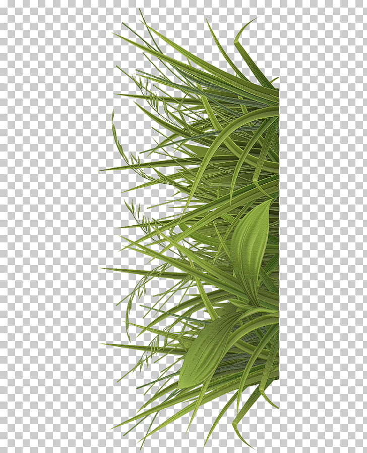 Jamu Betel Sweet Grass Paan Herb, others PNG clipart.