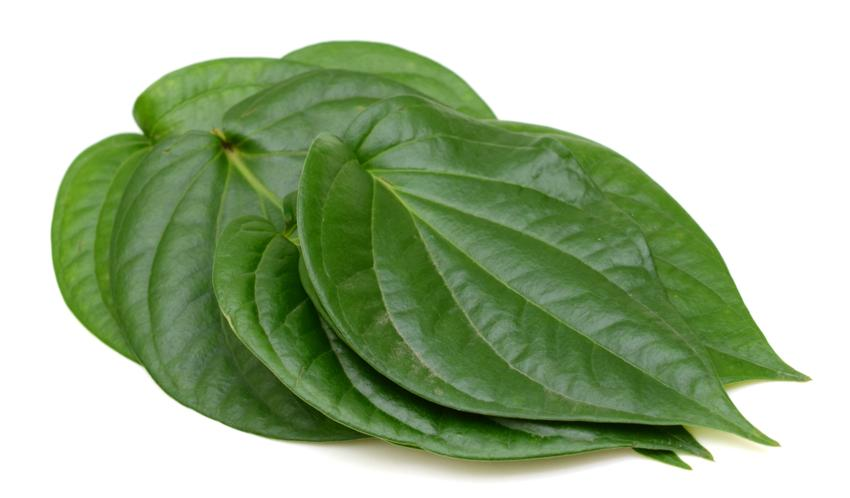 Paan Leaf Png , (+) Pictures.
