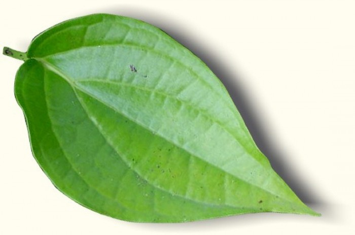 Paan Leaf Png Vector, Clipart, PSD.