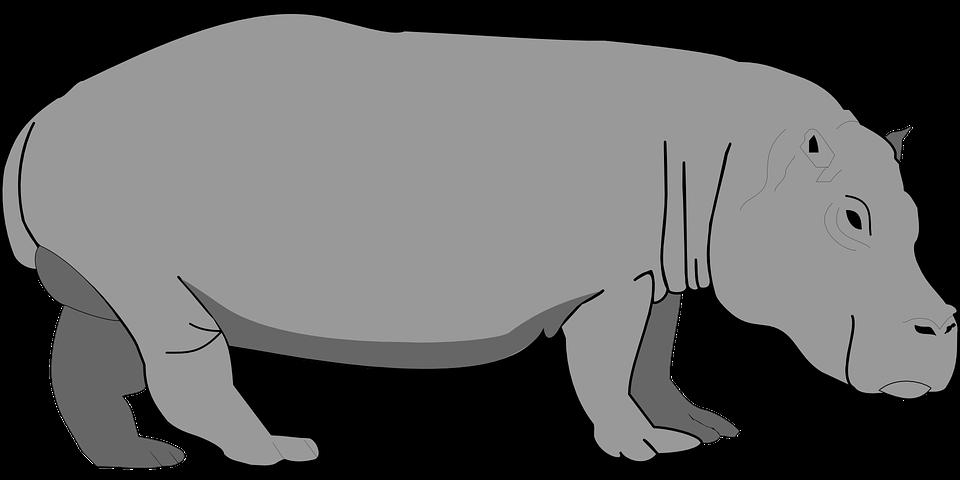 Free vector graphic: Hippo, Gray, Hippopotamus, Wildlife.