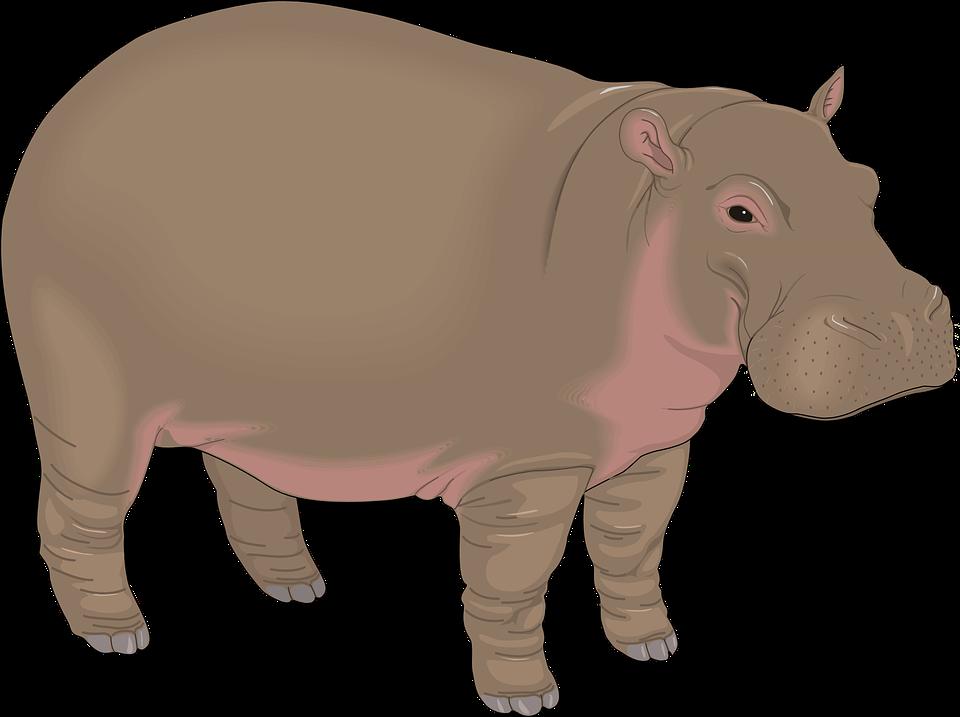 Free vector graphic: Hippopotamus, Brown, Water, Animal.