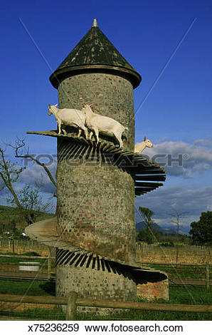 Stock Photograph of goat house paarl nr cape town s. africa.