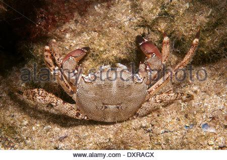 Crustacea Stock Photos & Crustacea Stock Images.