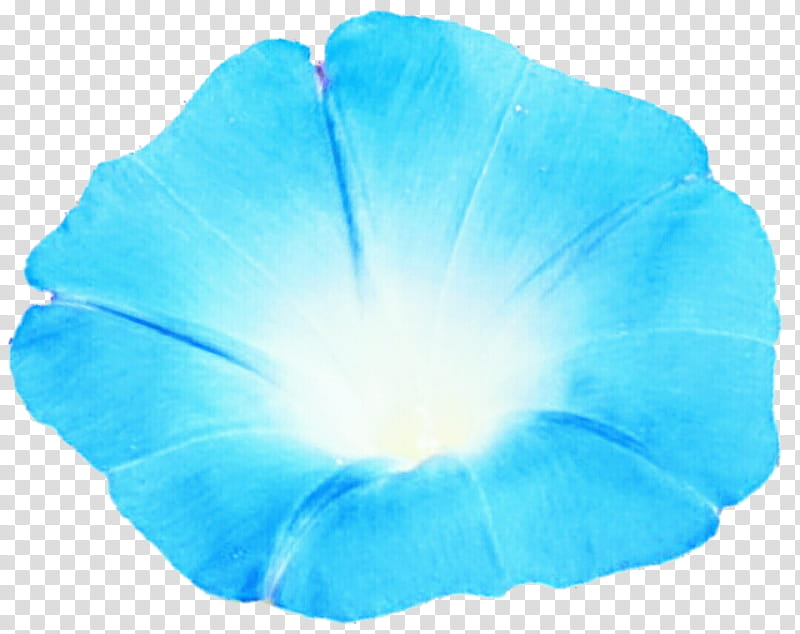 Pacific Blue Morning Glory transparent background PNG.