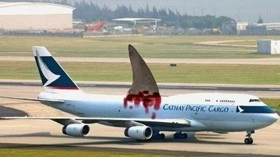 Petition · Ban the transport of shark fin from all Cathay.