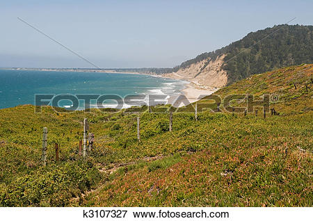 Picture of Pacific coast k3107327.