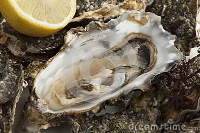 Pacific Oyster Royalty Free Stock Photo.