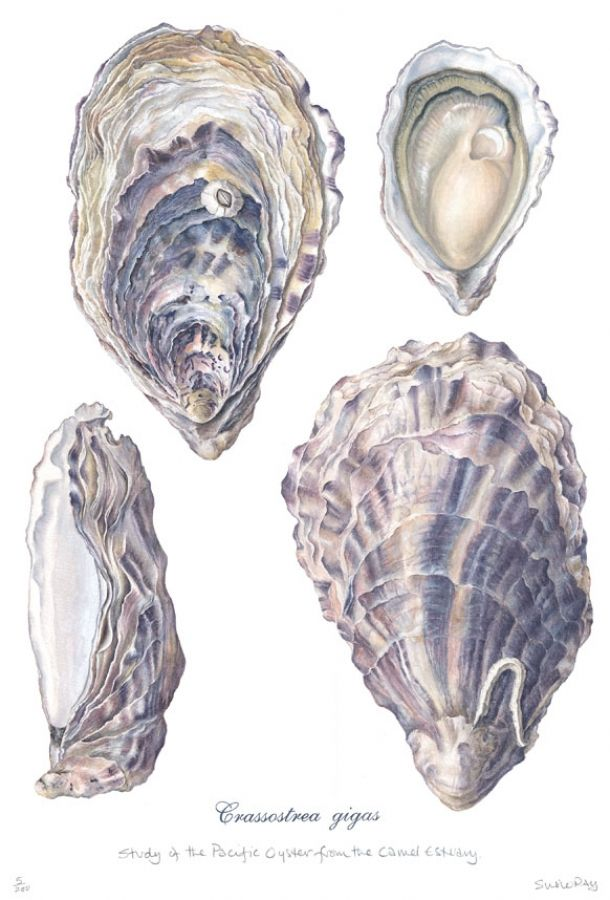 1000+ images about Oyster on Pinterest.