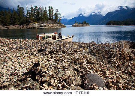 Pacific Oysters Stock Photos & Pacific Oysters Stock Images.