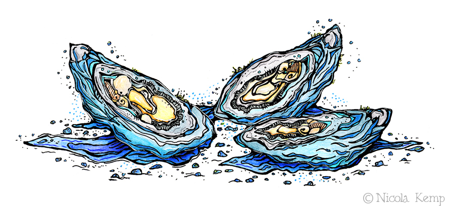 pacific oysters — Brown Fox Art.